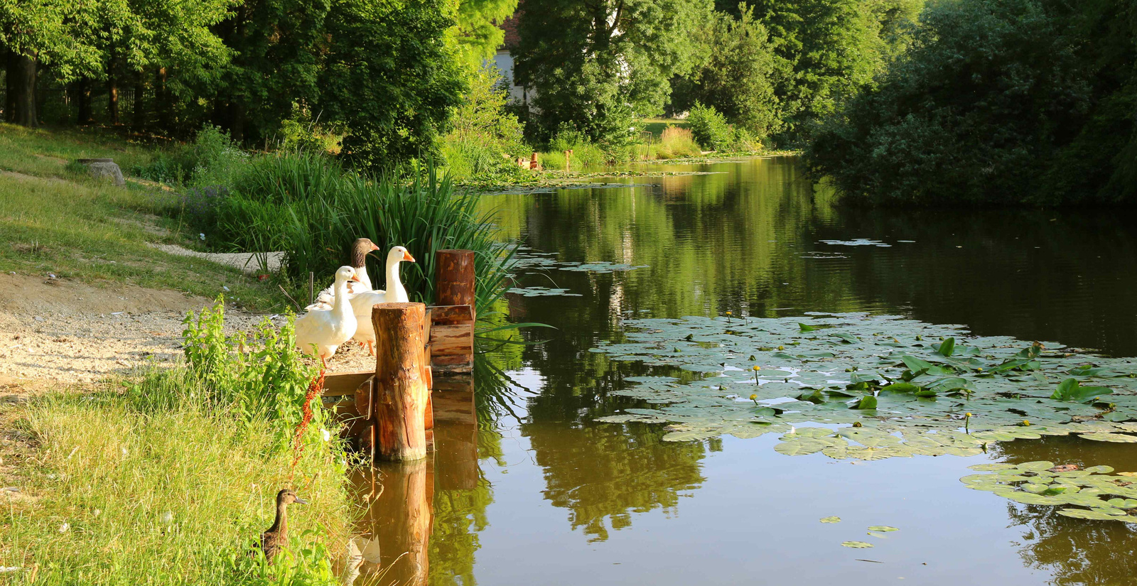 Reggel a tónál 089