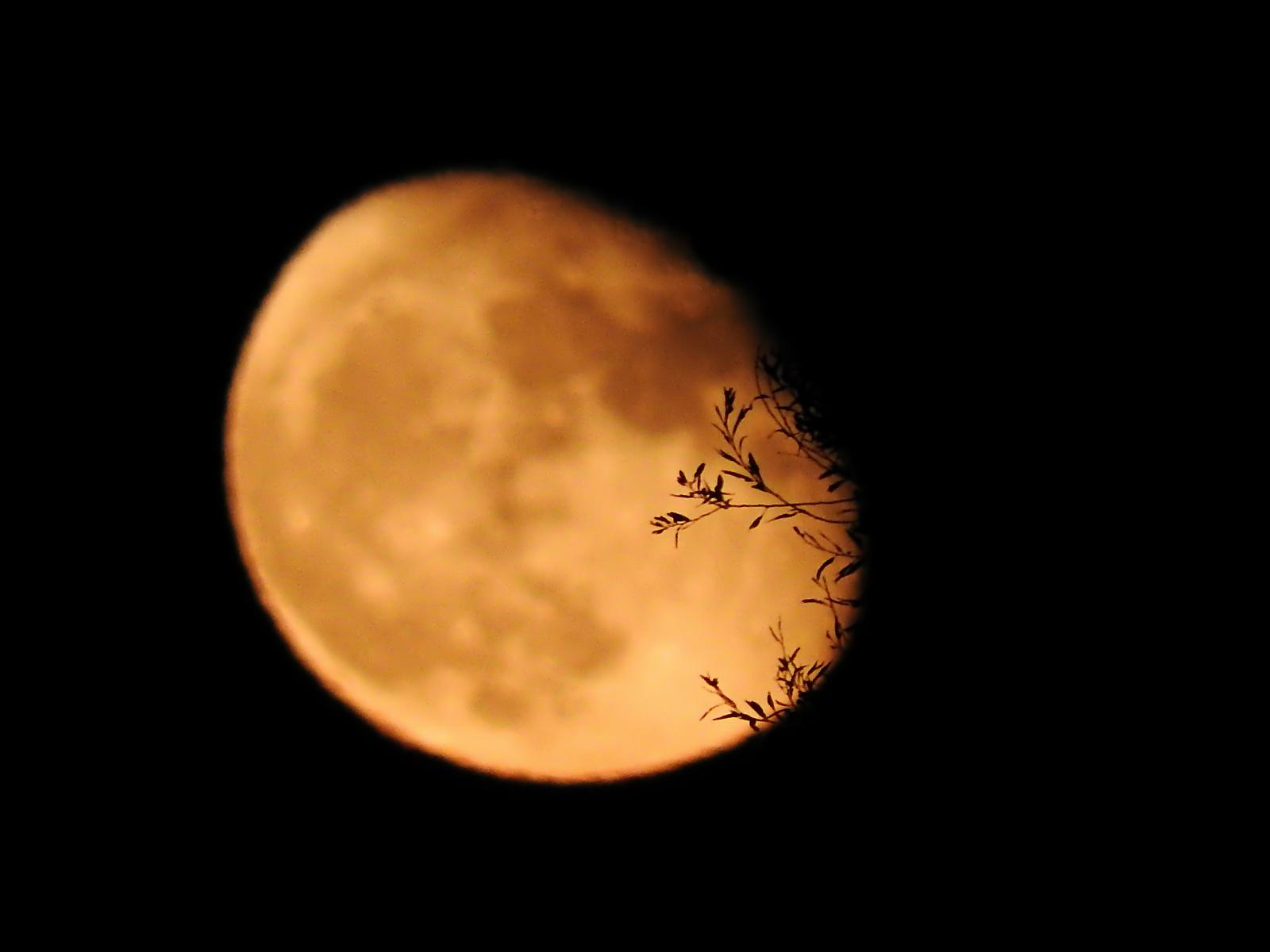 Fogyó Hold a háttérben és a faágak