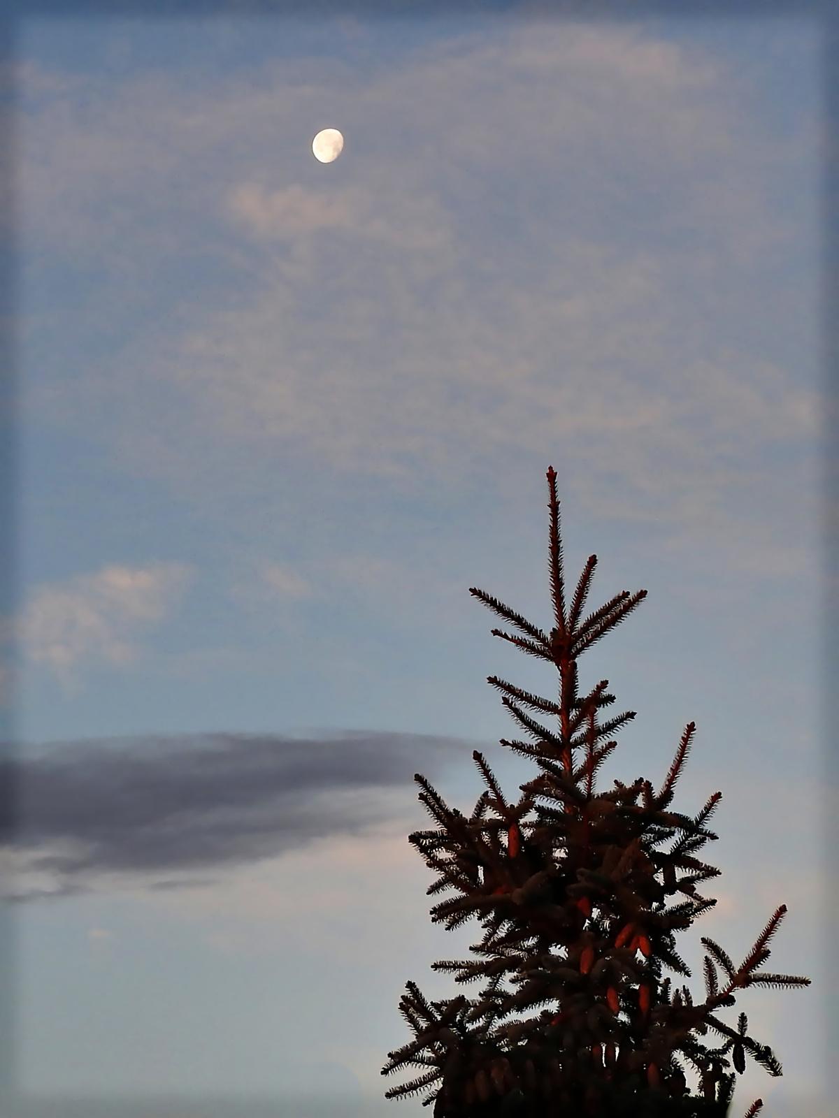 Fenyő / Hold / Tél