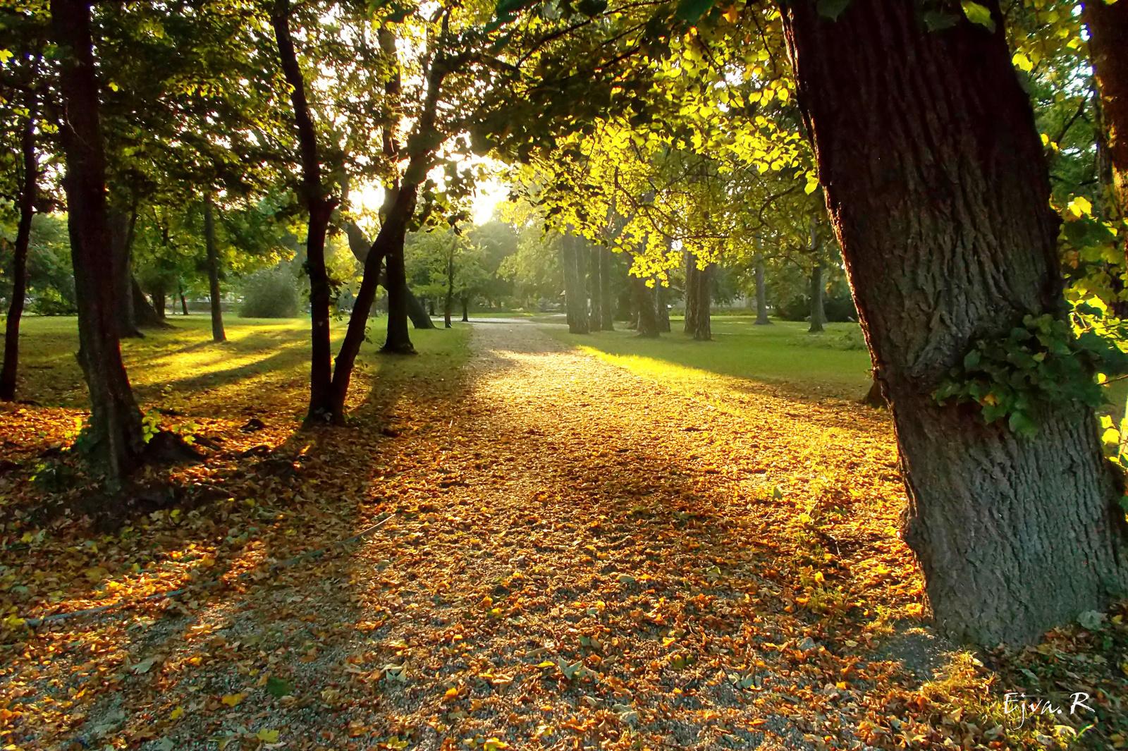 Őszi fények Park