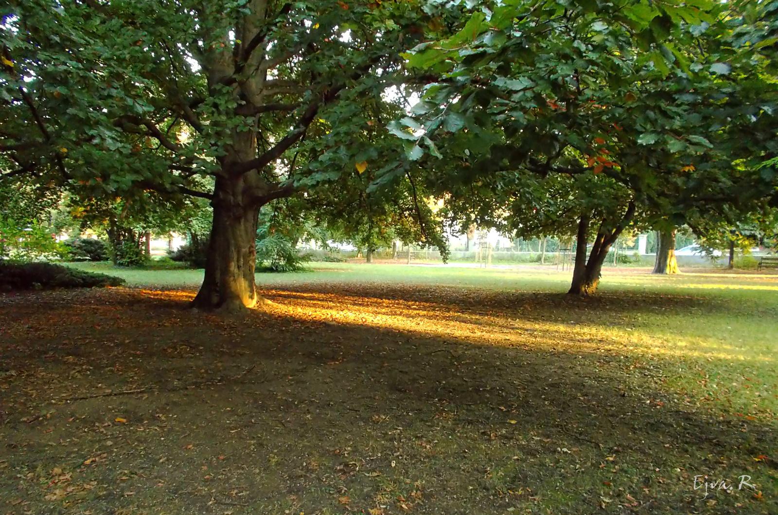Fák Park Ősz