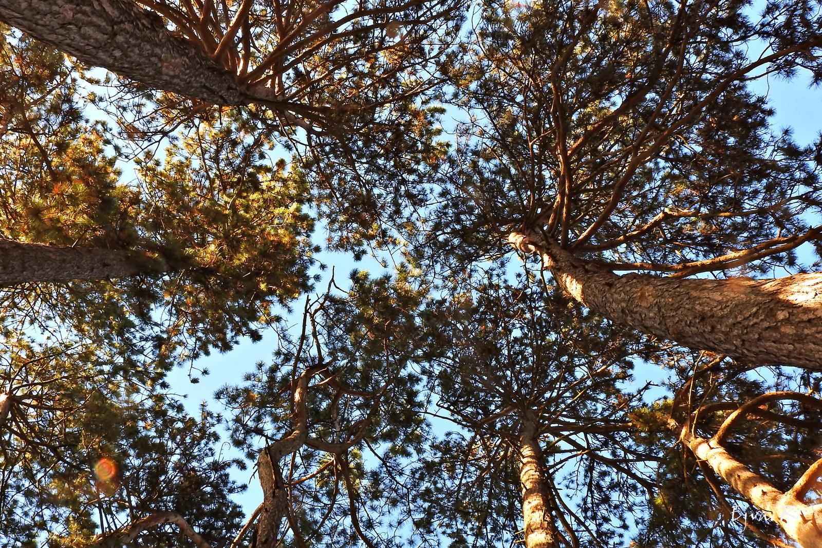 Őszi séta Égig érő fák