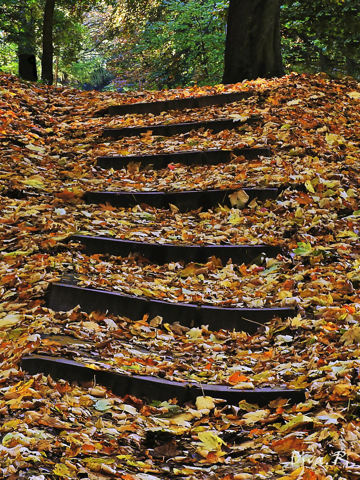 Őszi séta Lépcső
