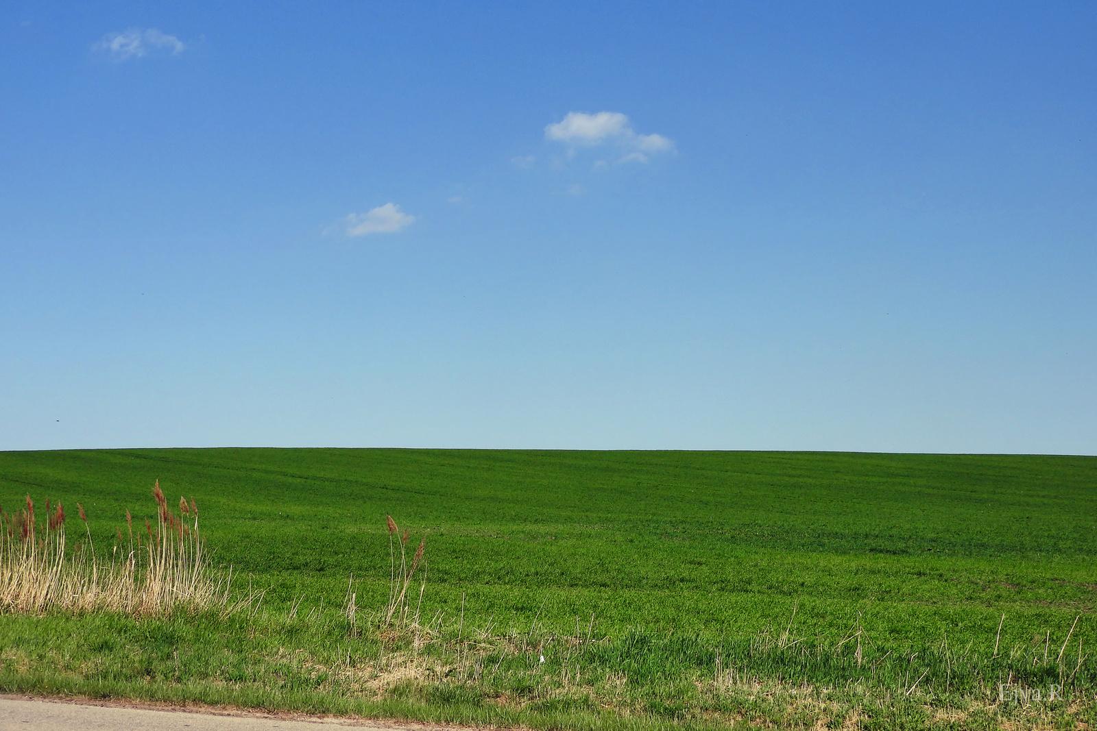 Tavasz Táj Zöldül a vetés
