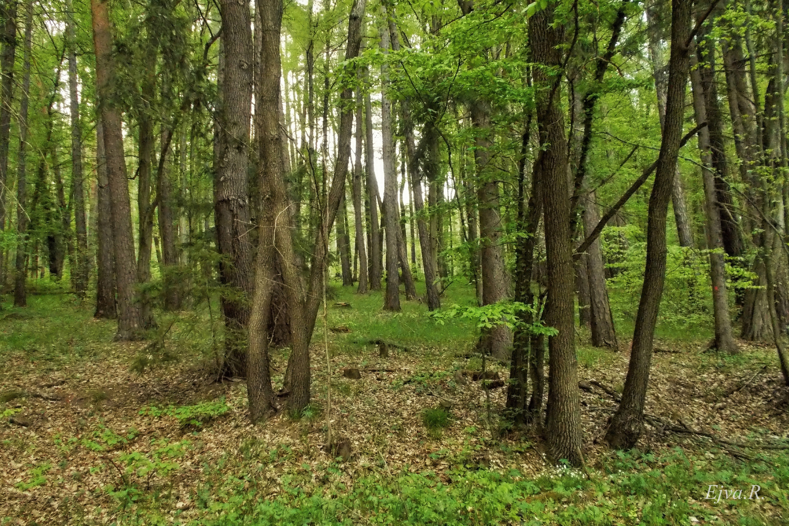 Tavasz Erdő