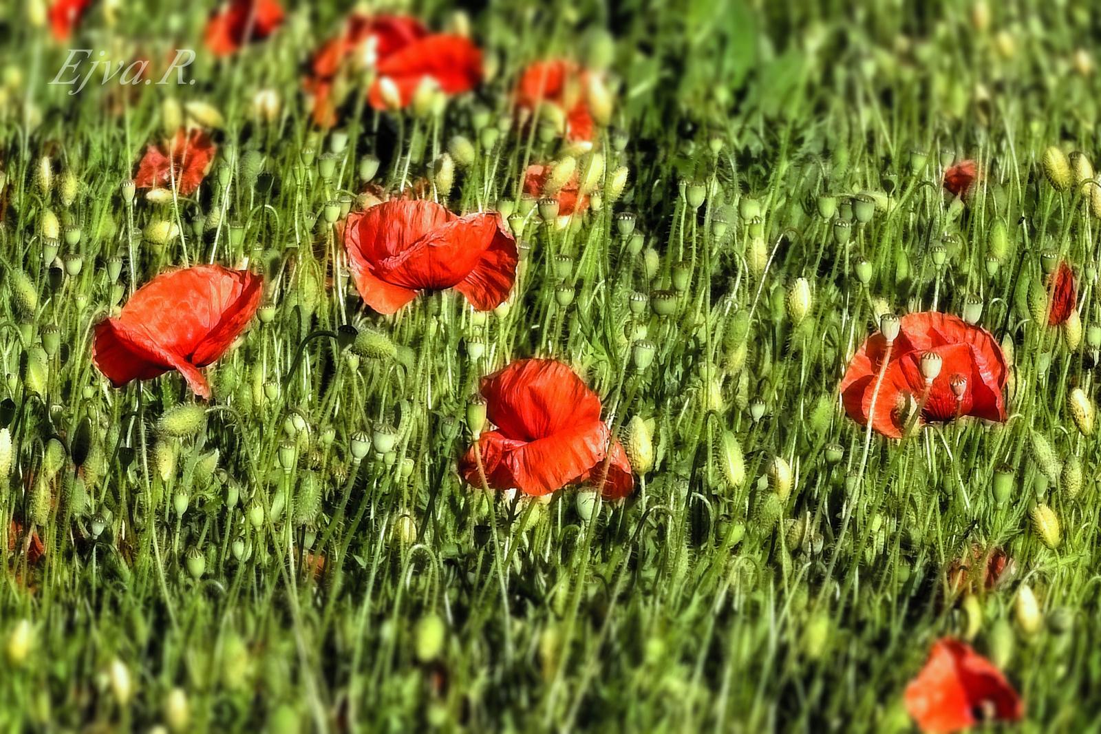 Virágos Rét Tavasz