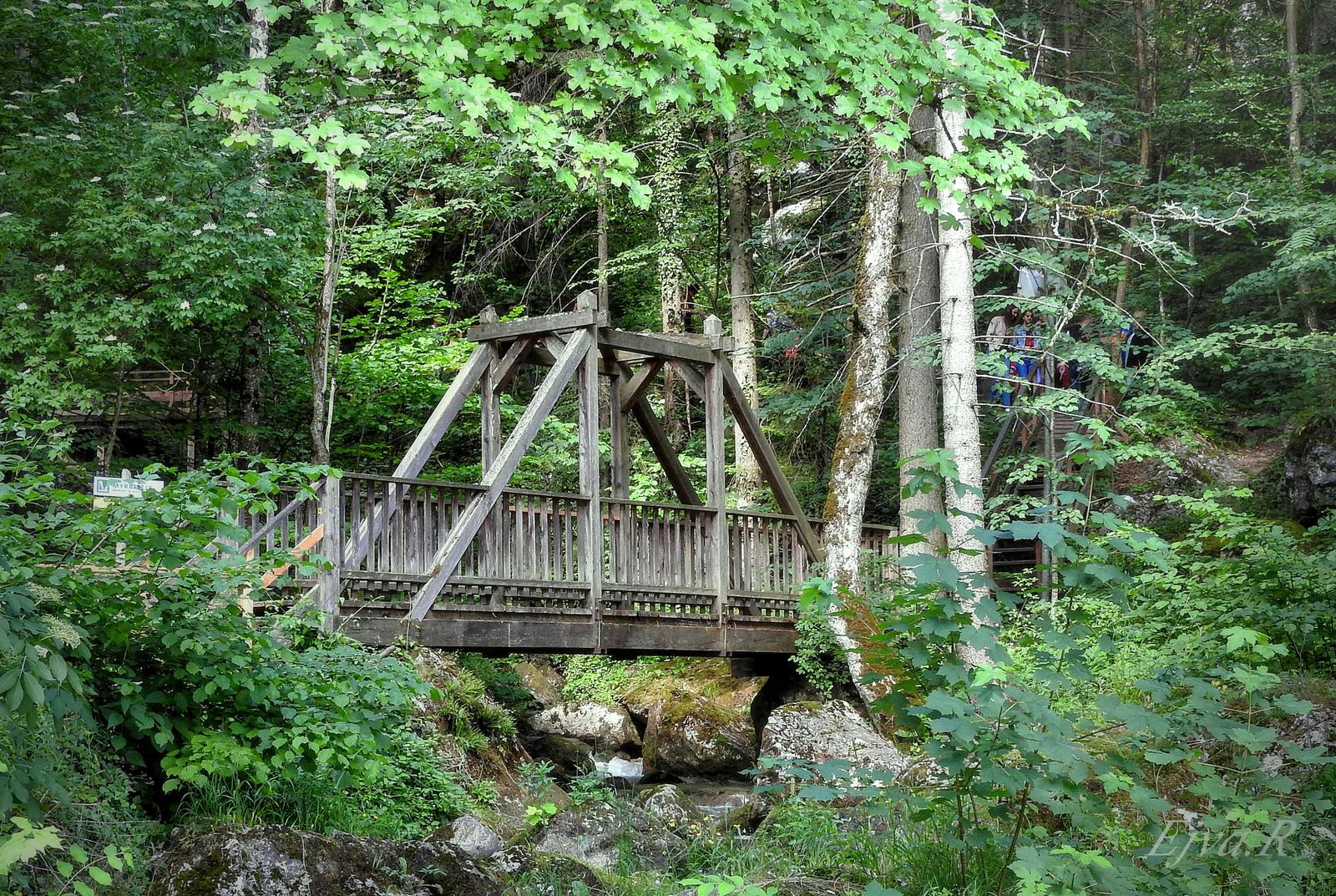 Erdő Híd Nyár Alpok