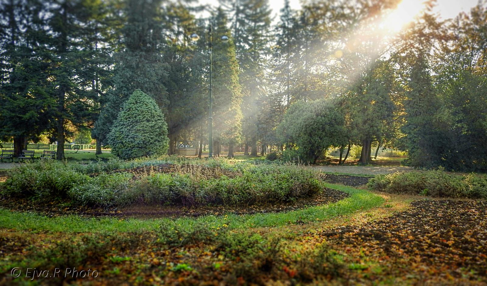 Köd Napfény Erzsébet kert Ősz