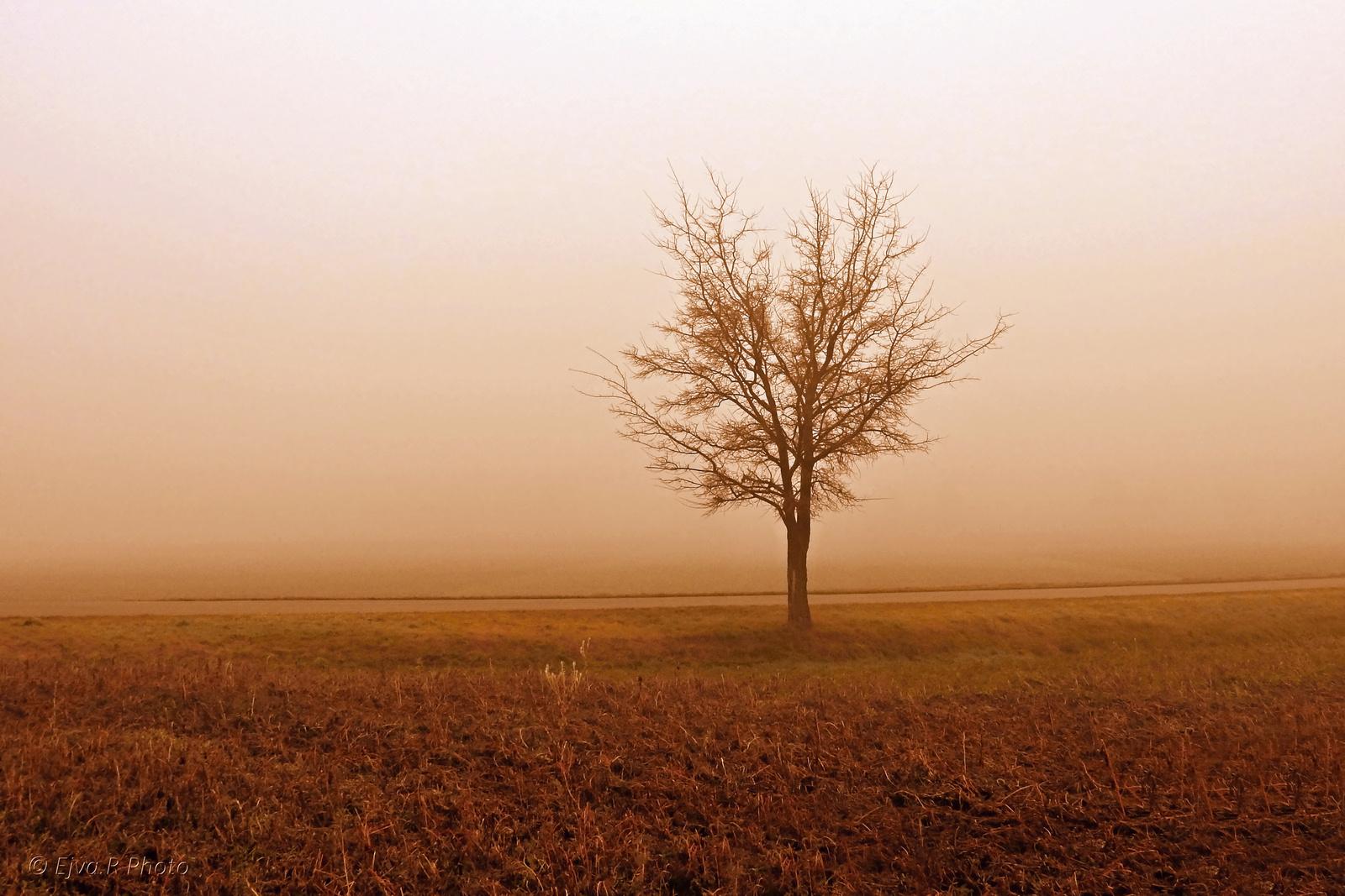 Fa köd másképpen