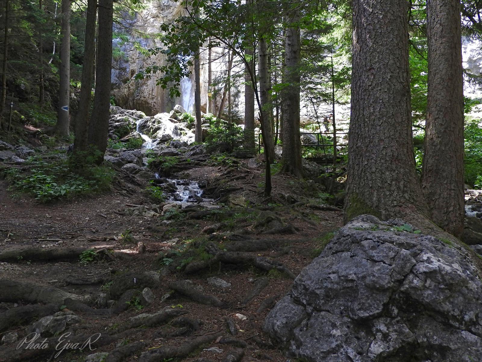 Erdő Nyár