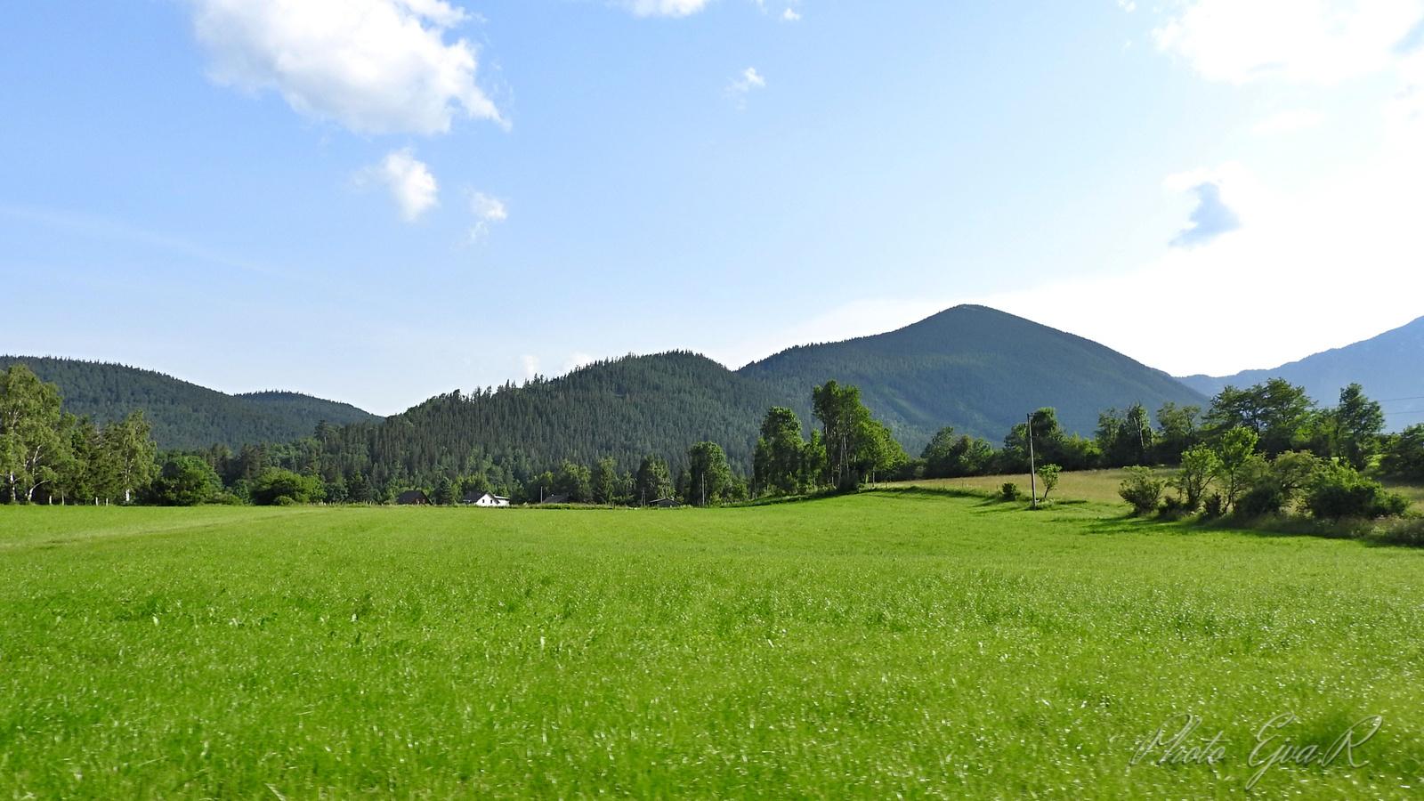 Alpok Nyár