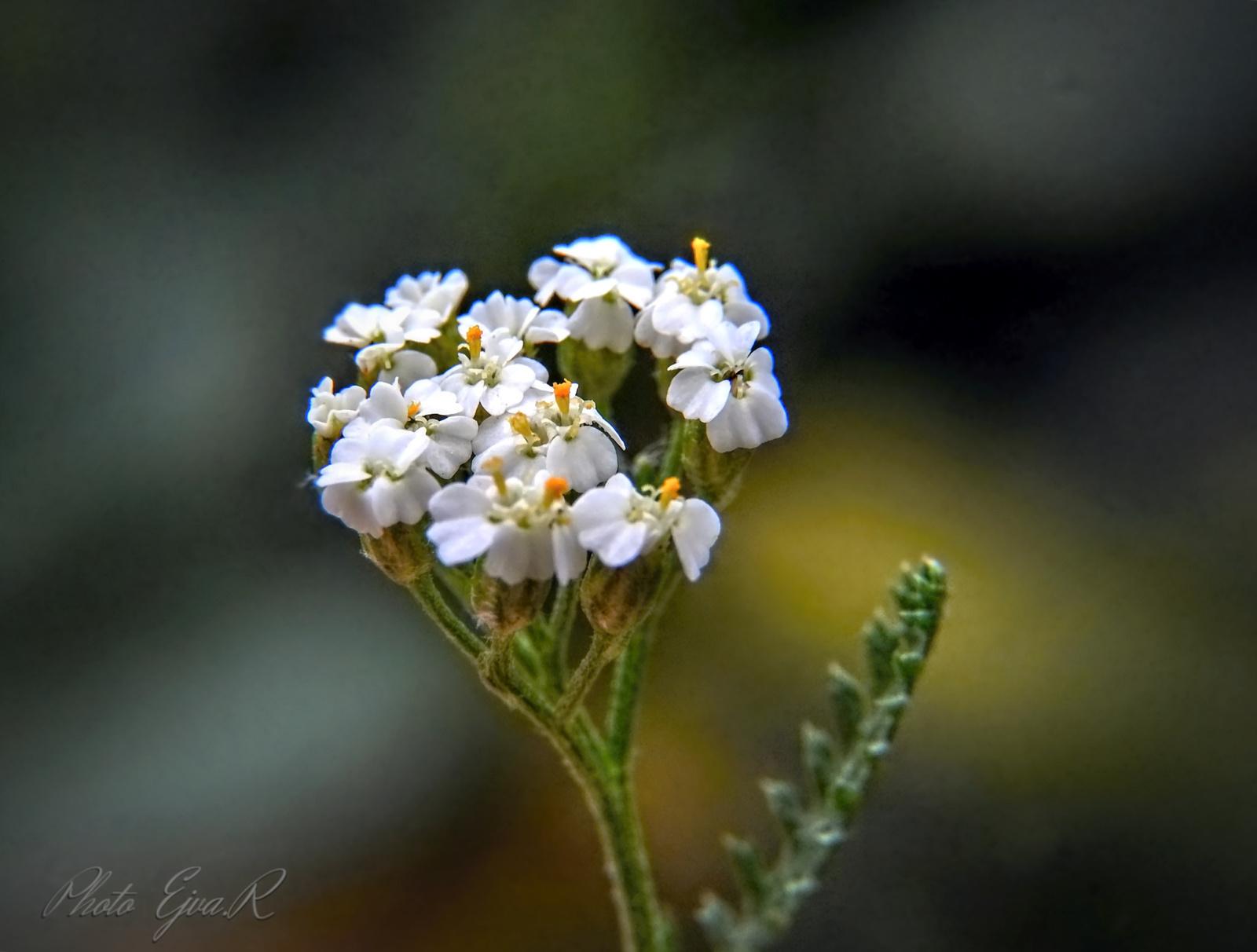 Virág Nyár