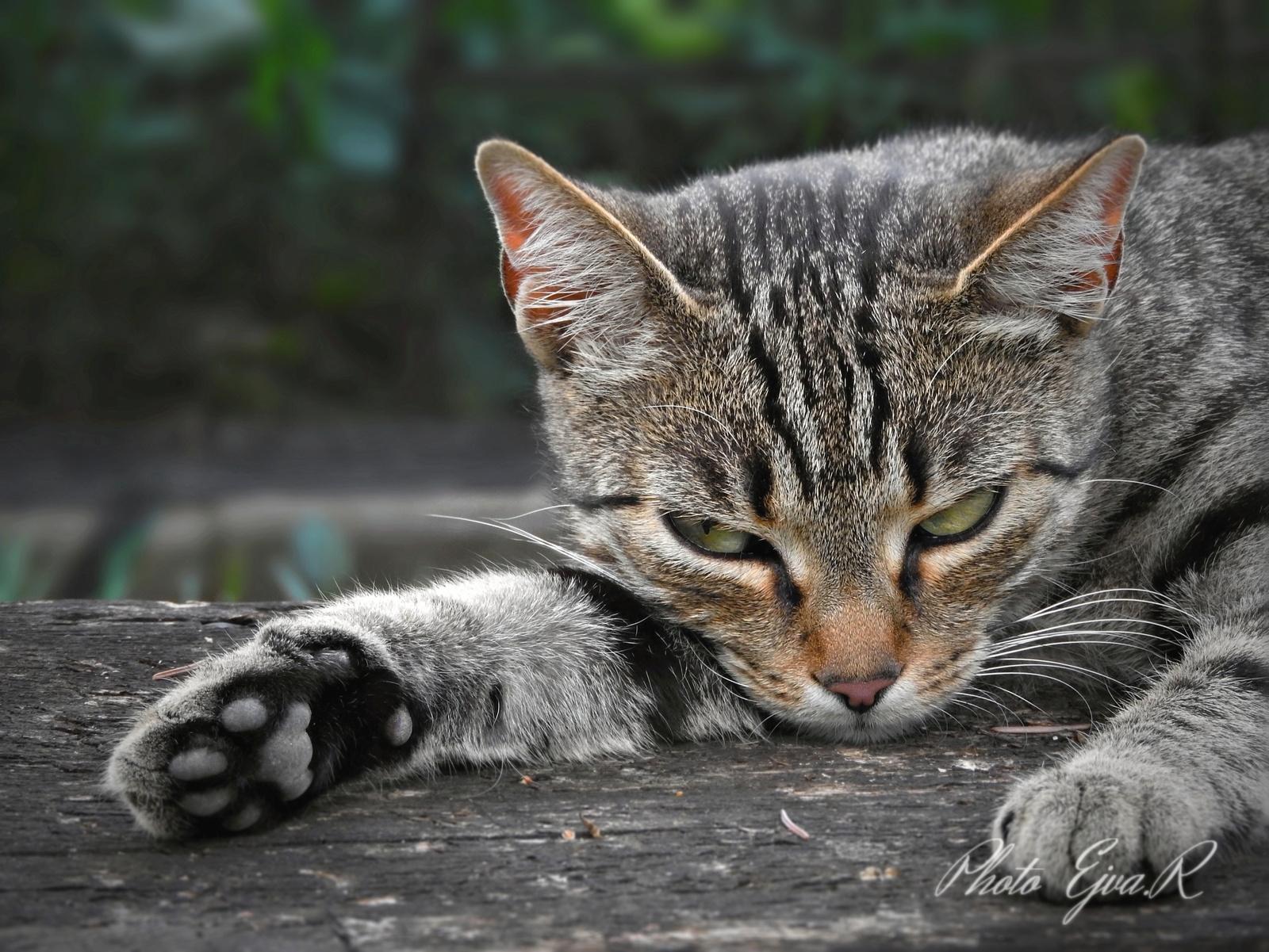 Csak hiszed hogy alszom!