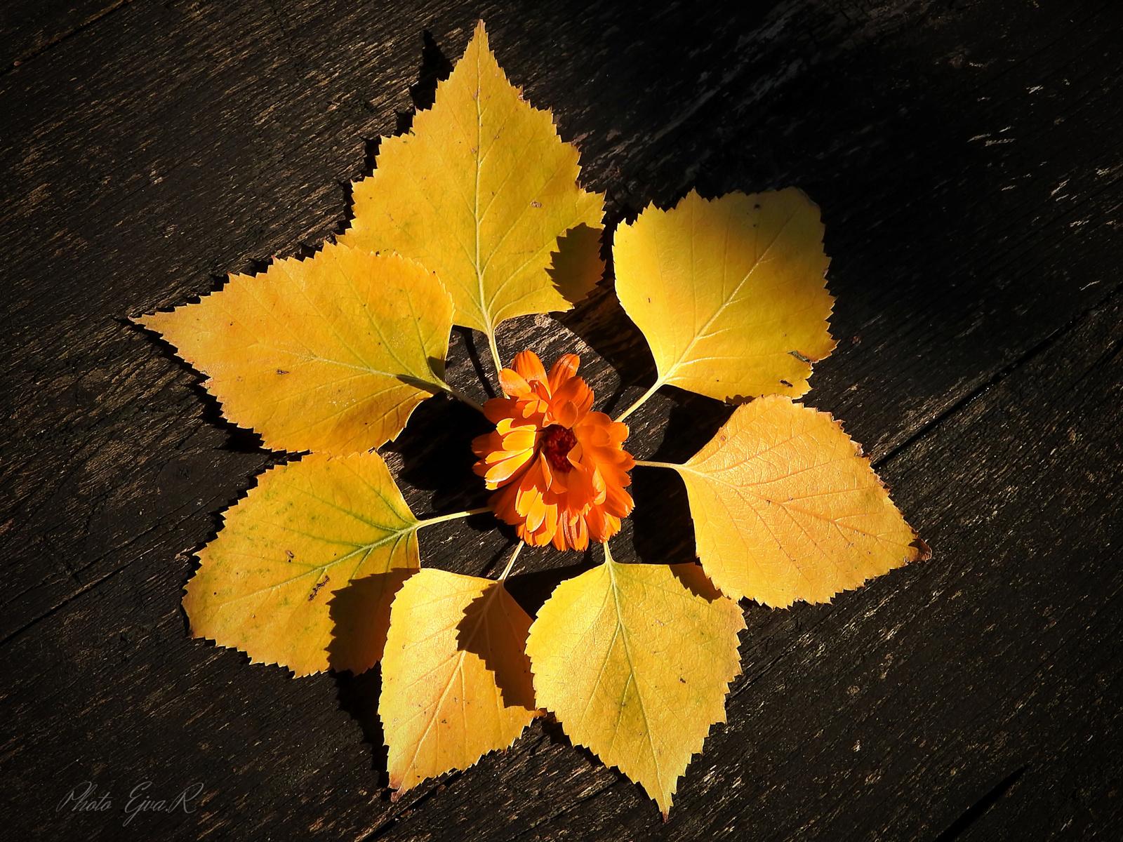 Levelek Ősz