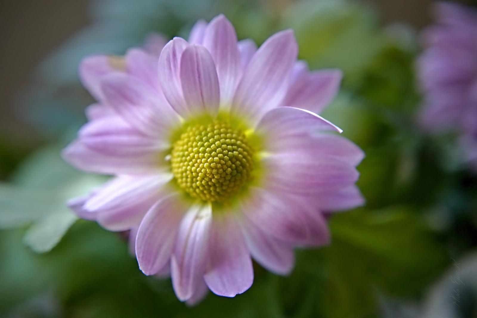 Virág közelről