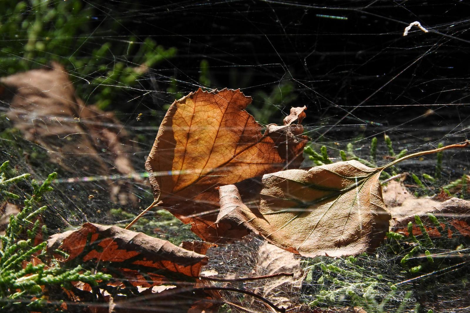 Fogságban Jó erős a pókháló