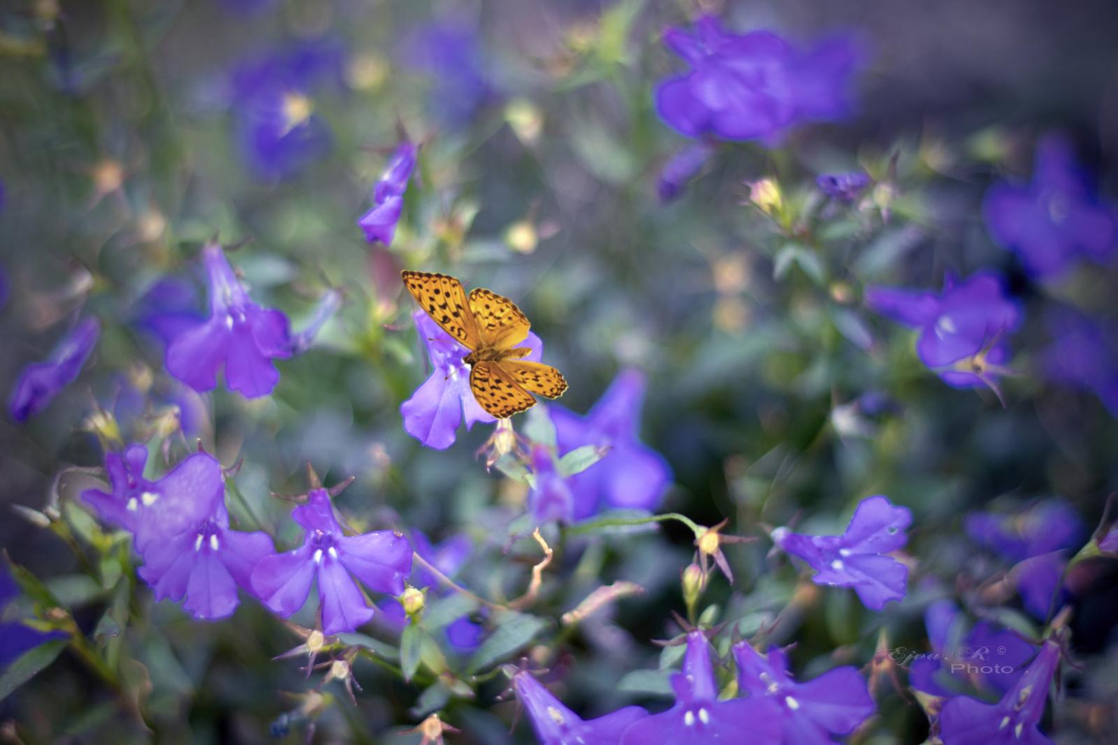 Pillangó Virágok Ősz