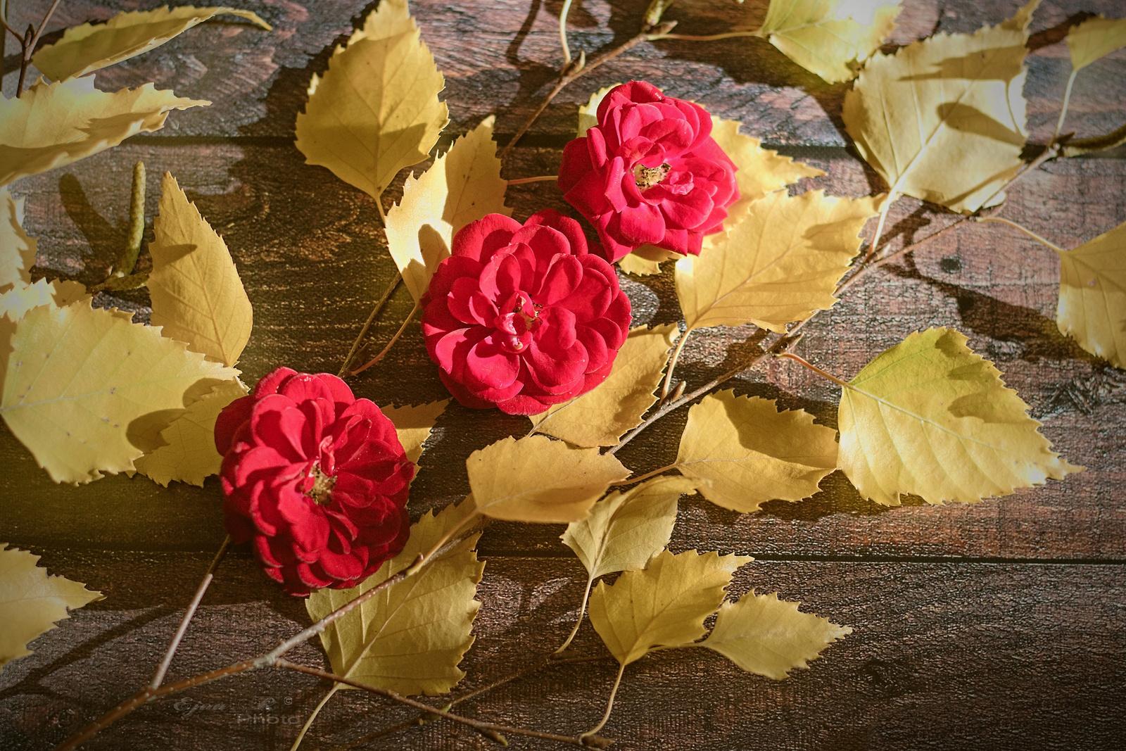 Rózsák Levelek Ősz