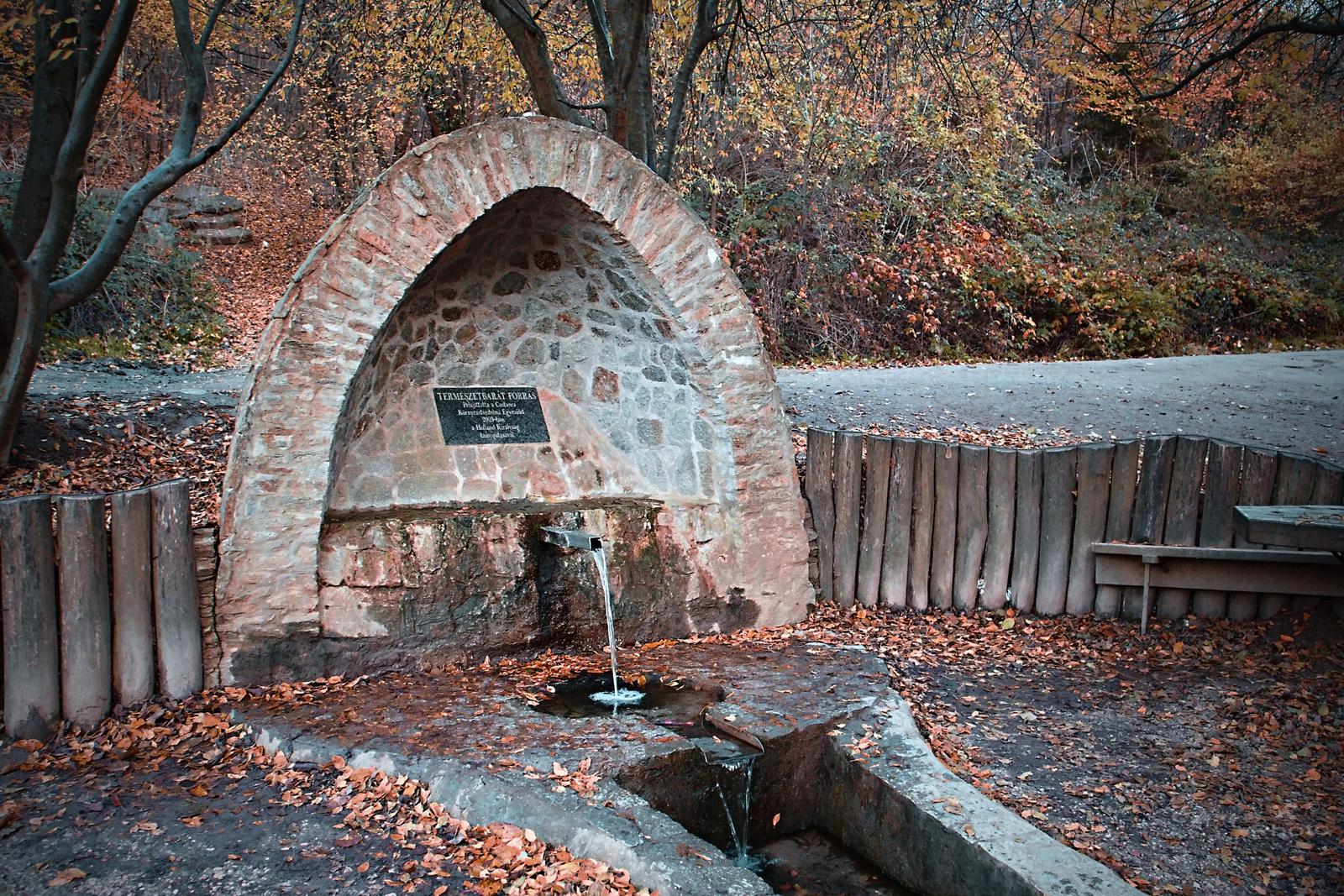 Őszi erdő Forrás Sopron