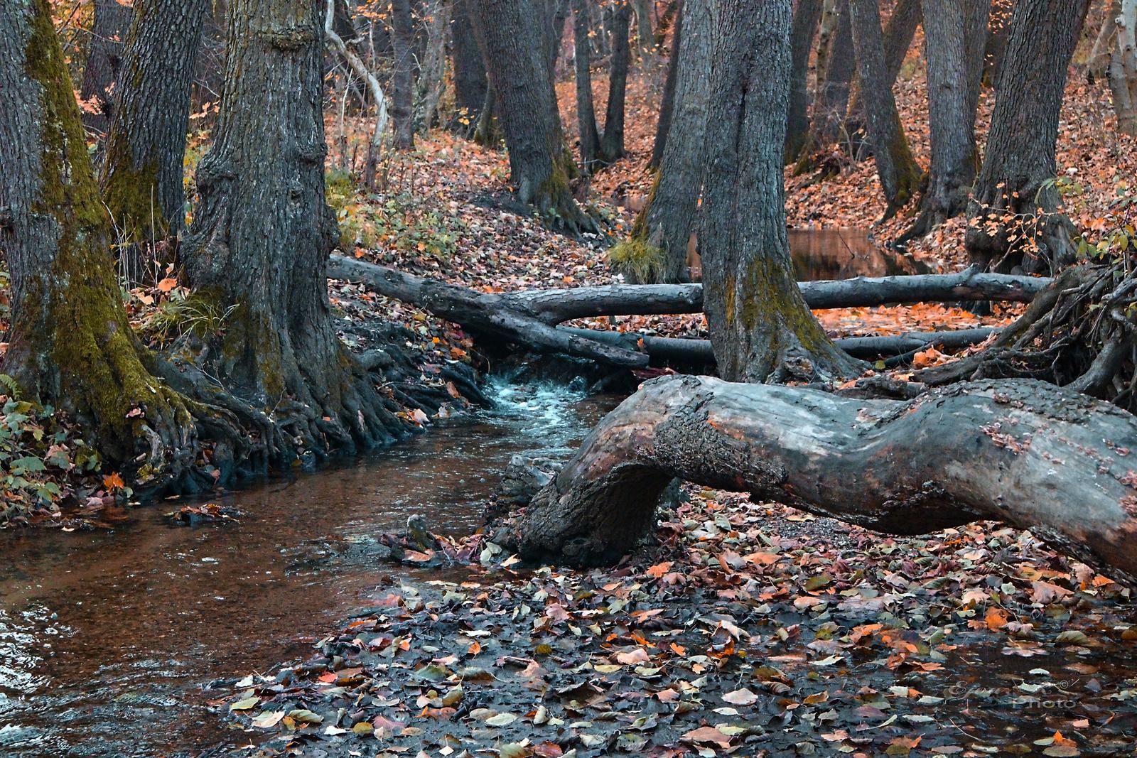 Őszi erdő Patak Sopron
