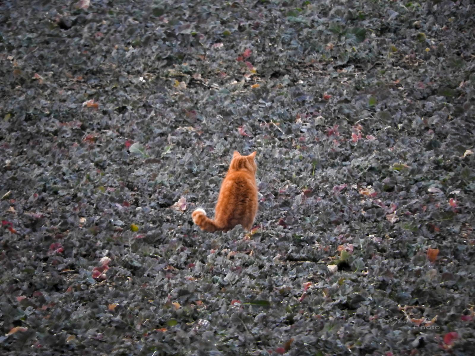 Vadászó macska