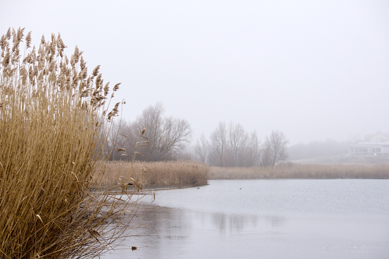 ködös táj tó