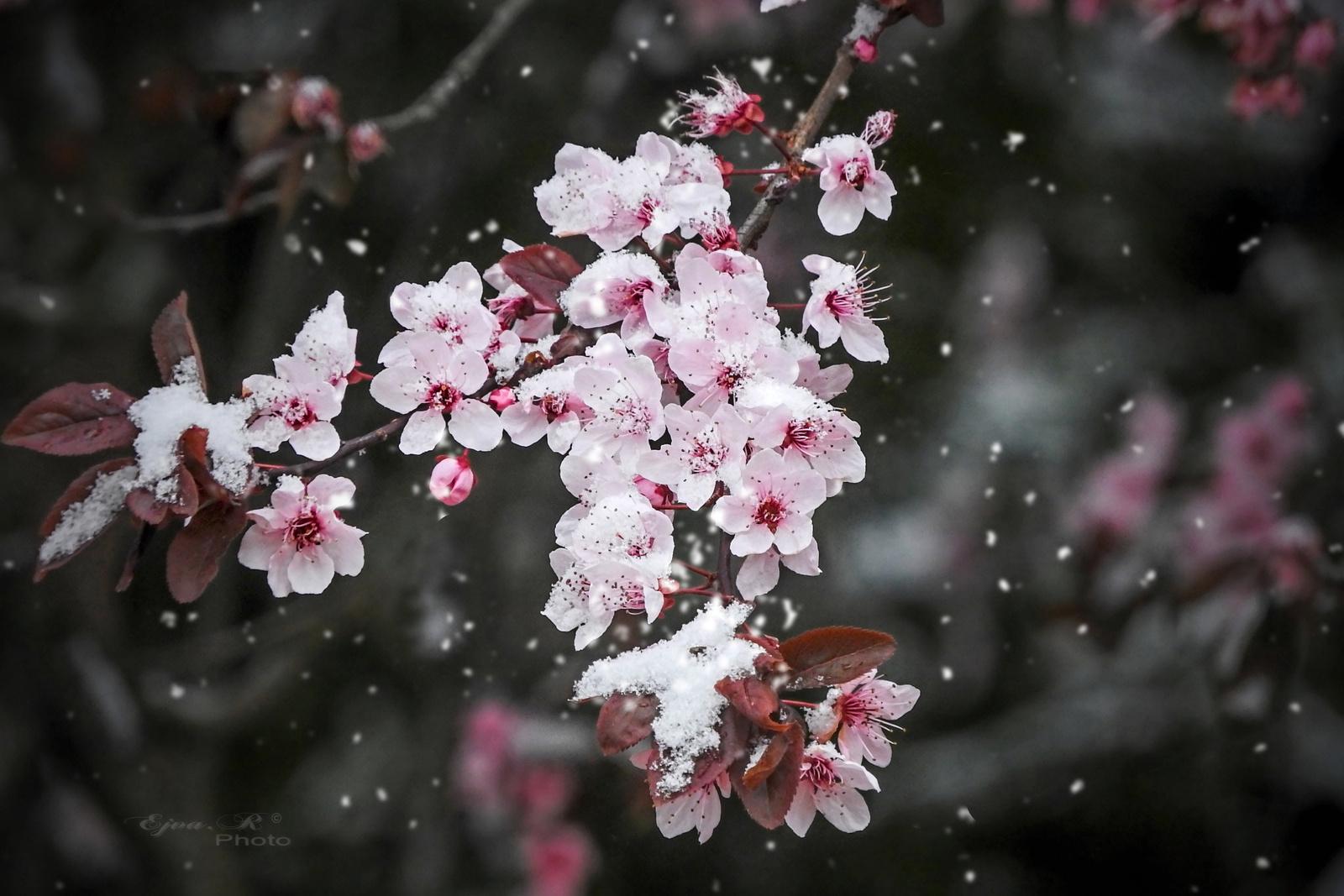 Hópihés virágok