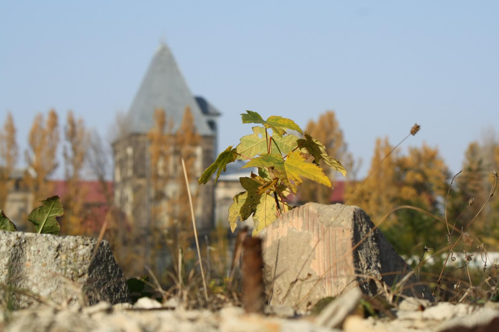 Romos ősz