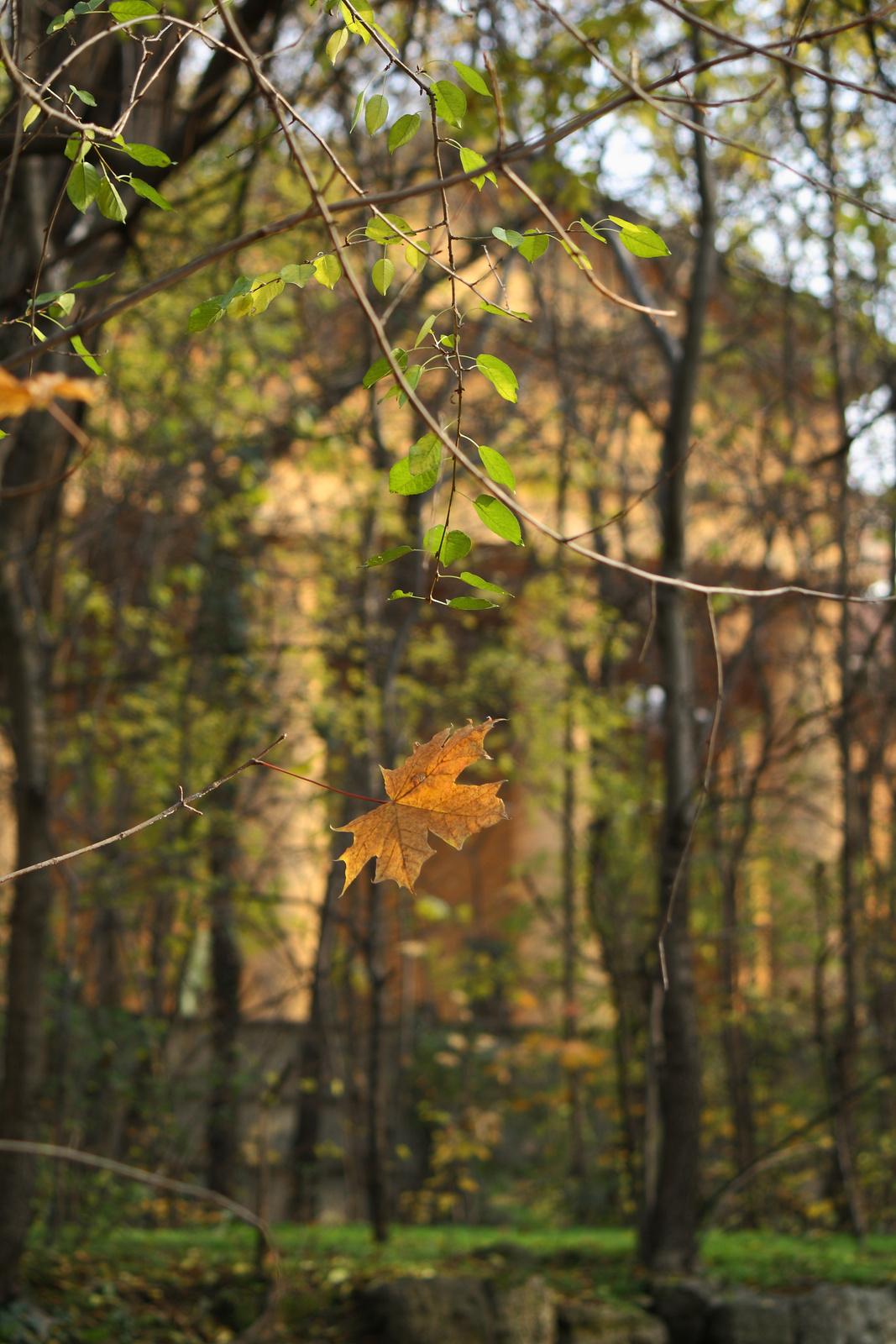 Klasszcista ősz