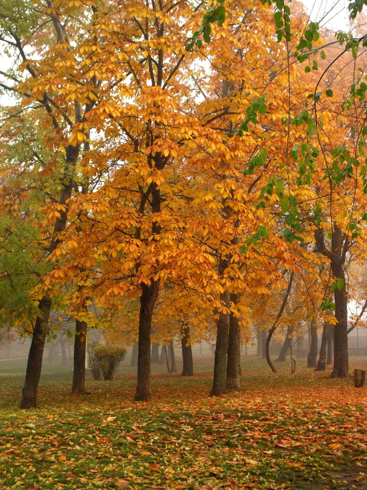 Reggel a parkban... 3.