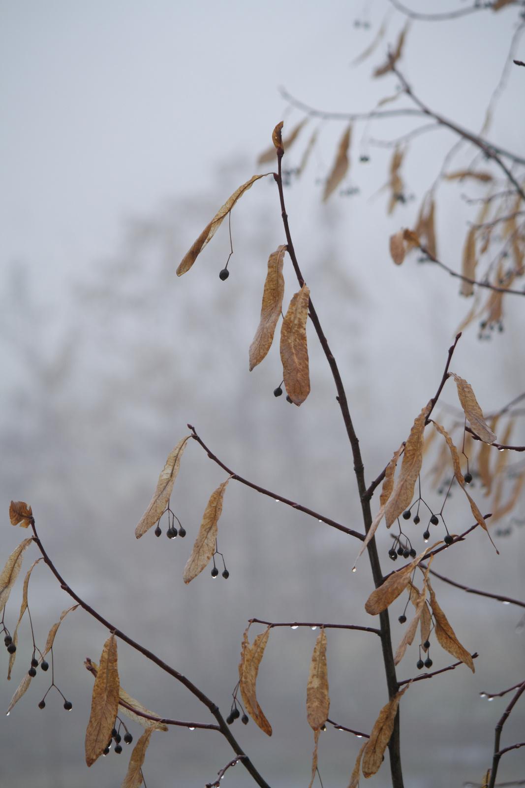 Bogyók, cseppek, köd.