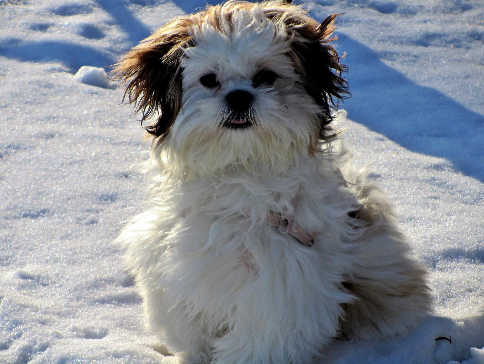 Először a hóban