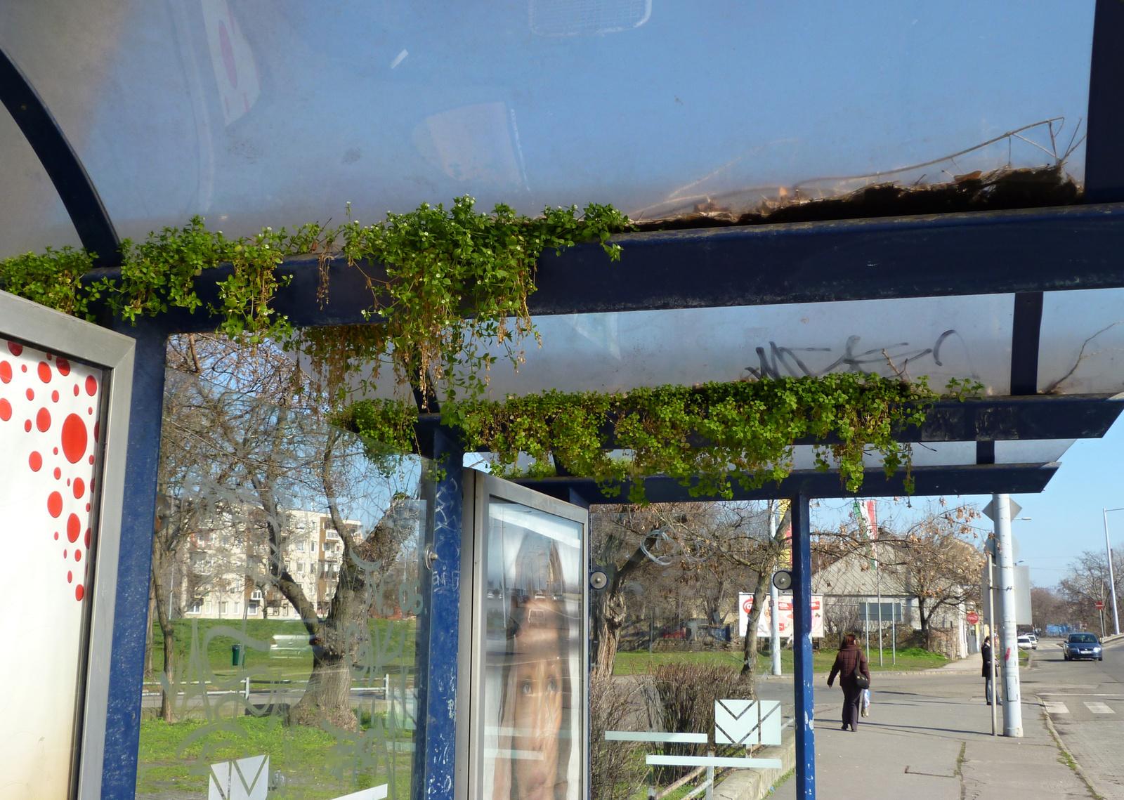 Itt a tavasz, nyílnak a buszmegállók - fotók: Eszter