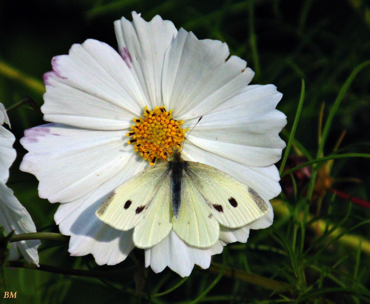 fehér virágon