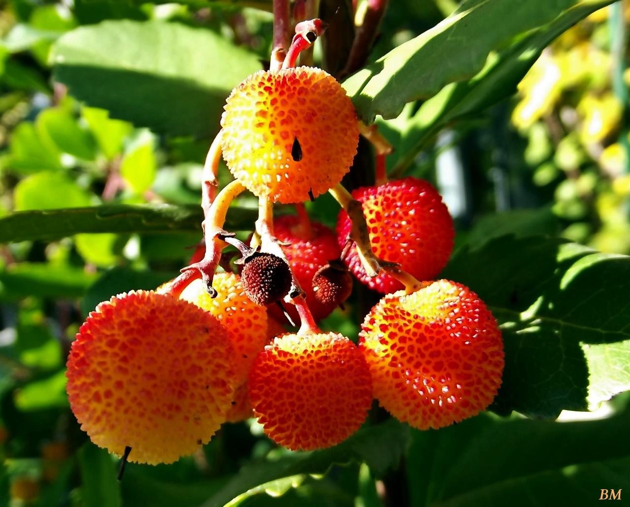 Eperfa termése vagy más