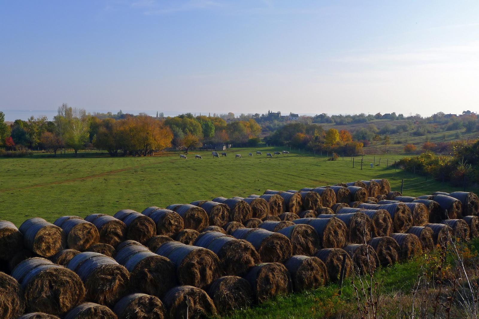 Bálák és marhák