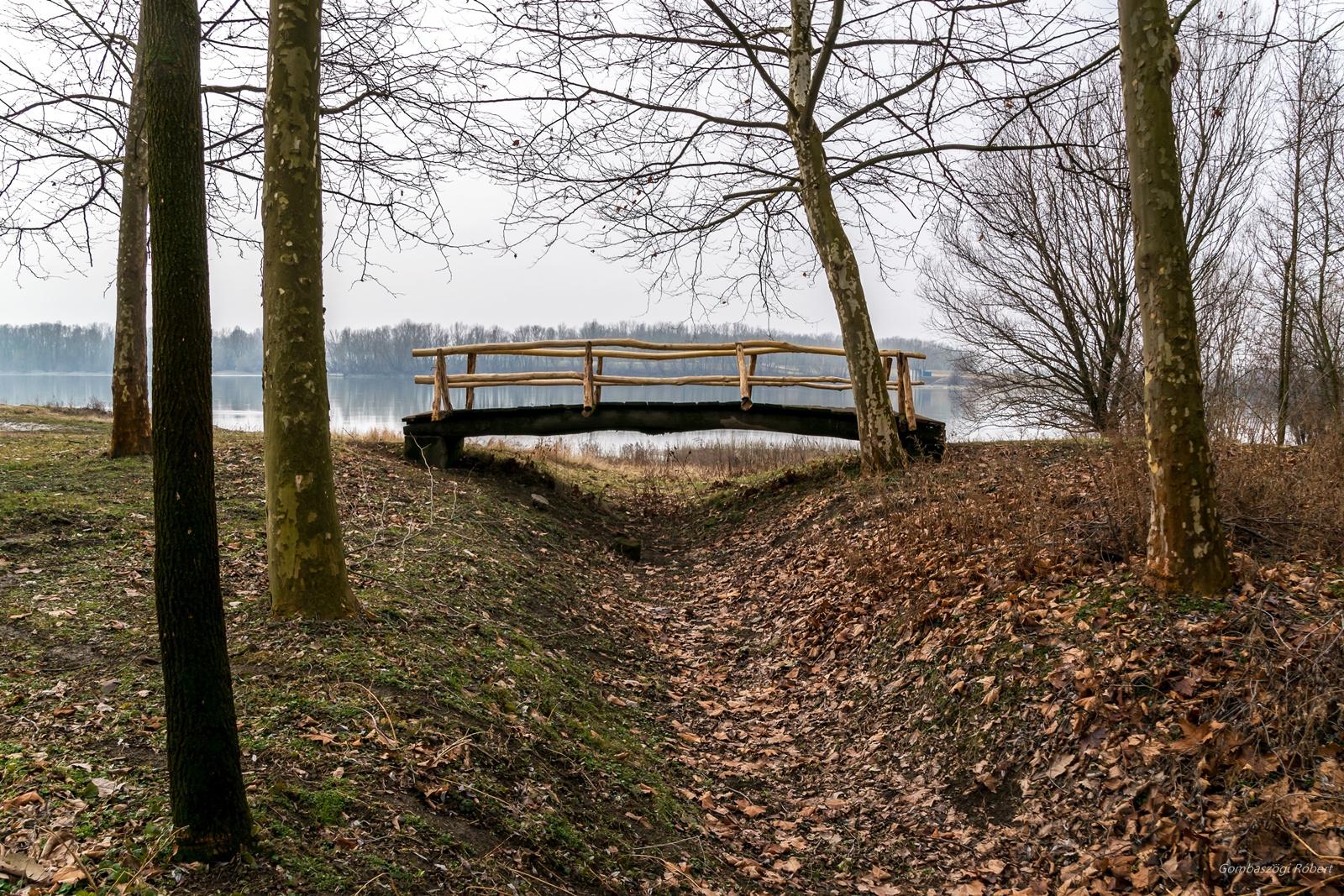 Híd az erdő szélén