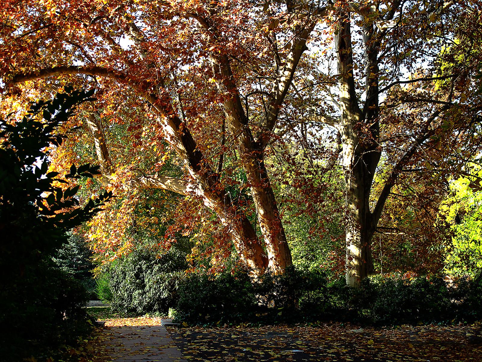 amikor még szép ősz volt 4