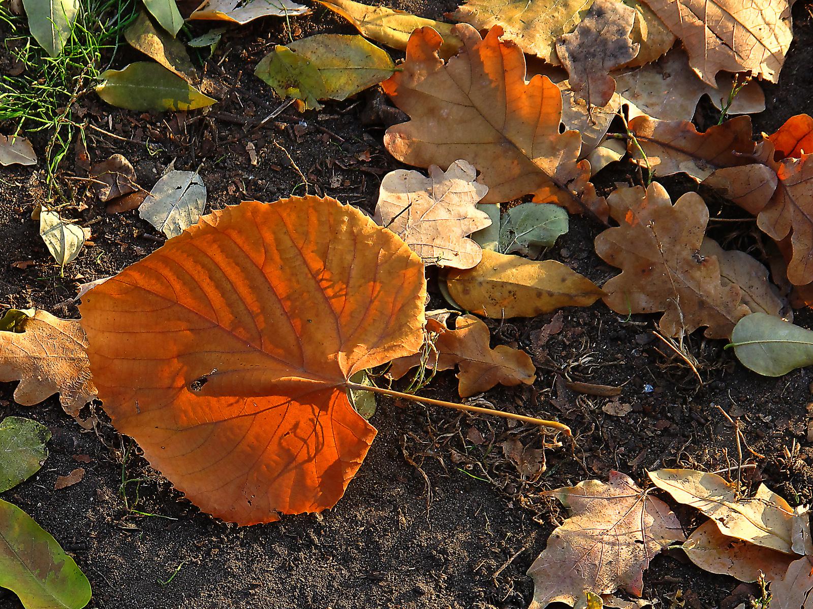 utolsó novemberi levelek 1
