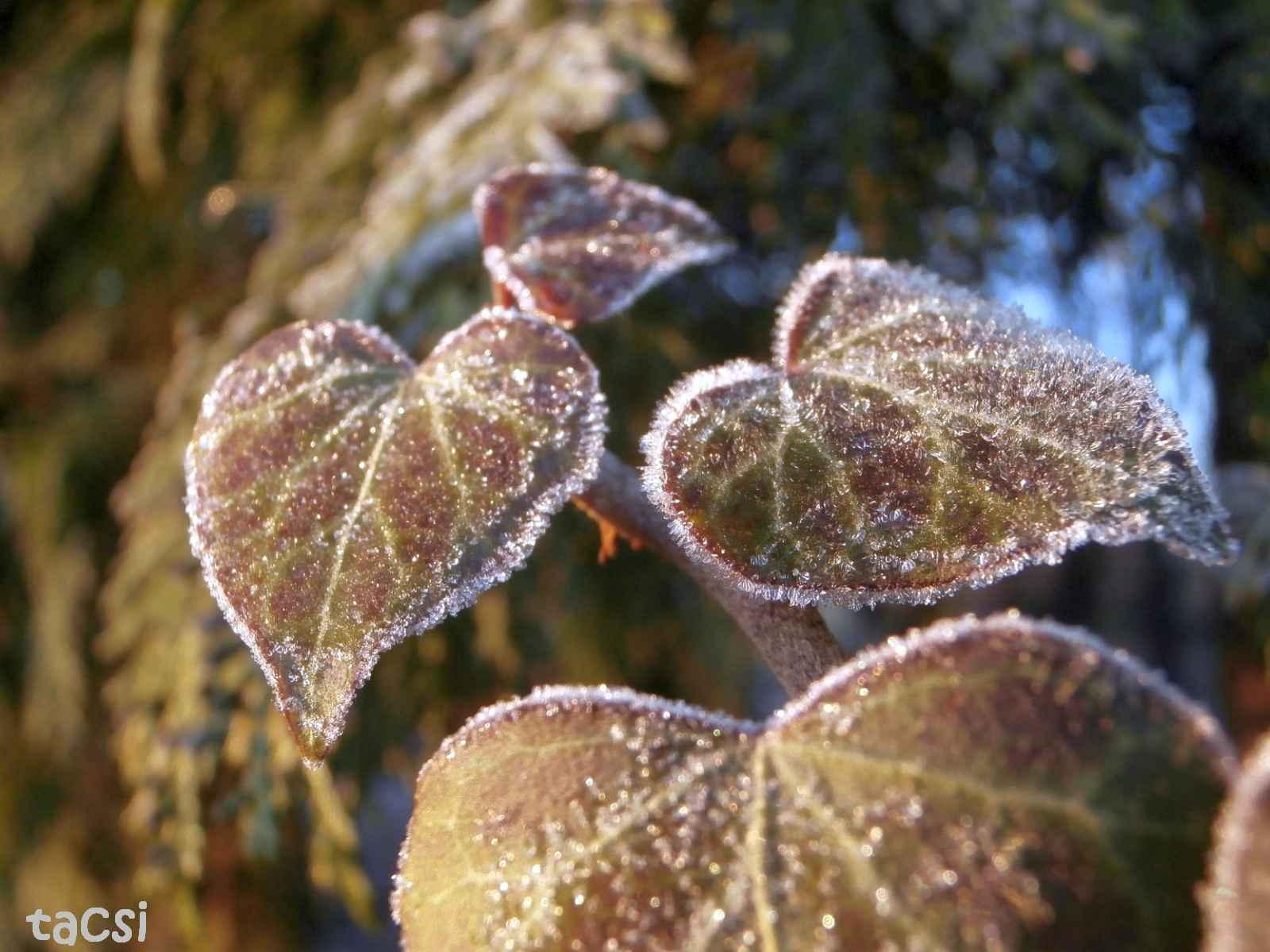 Csípős téli reggel