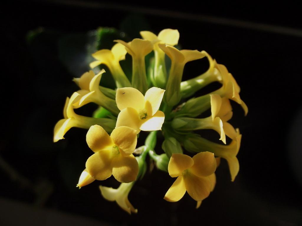 Viráglabda