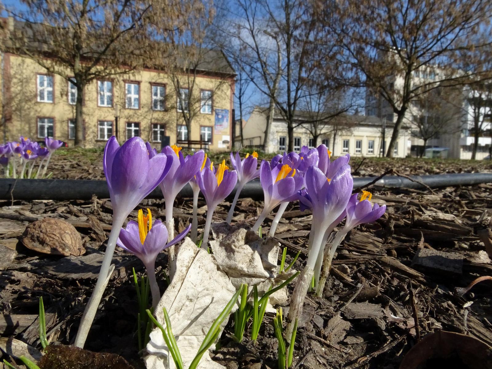 Tavasz a városban