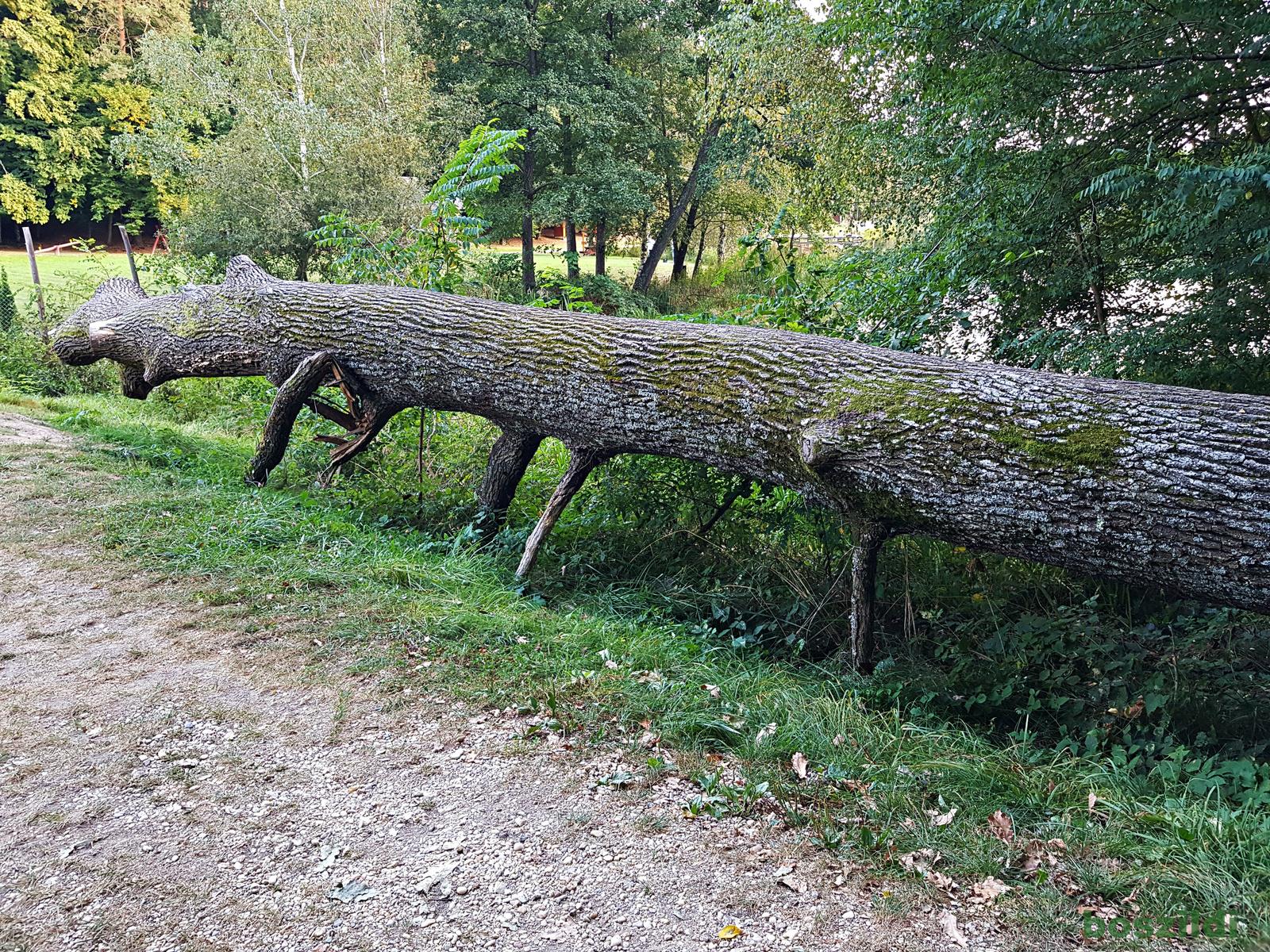Vadása-tó százlábúja