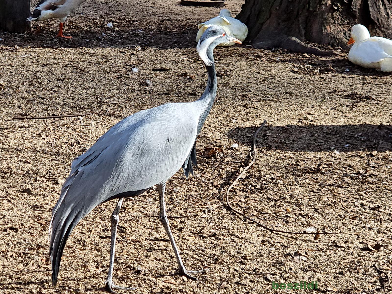 Margitszigeti madarak