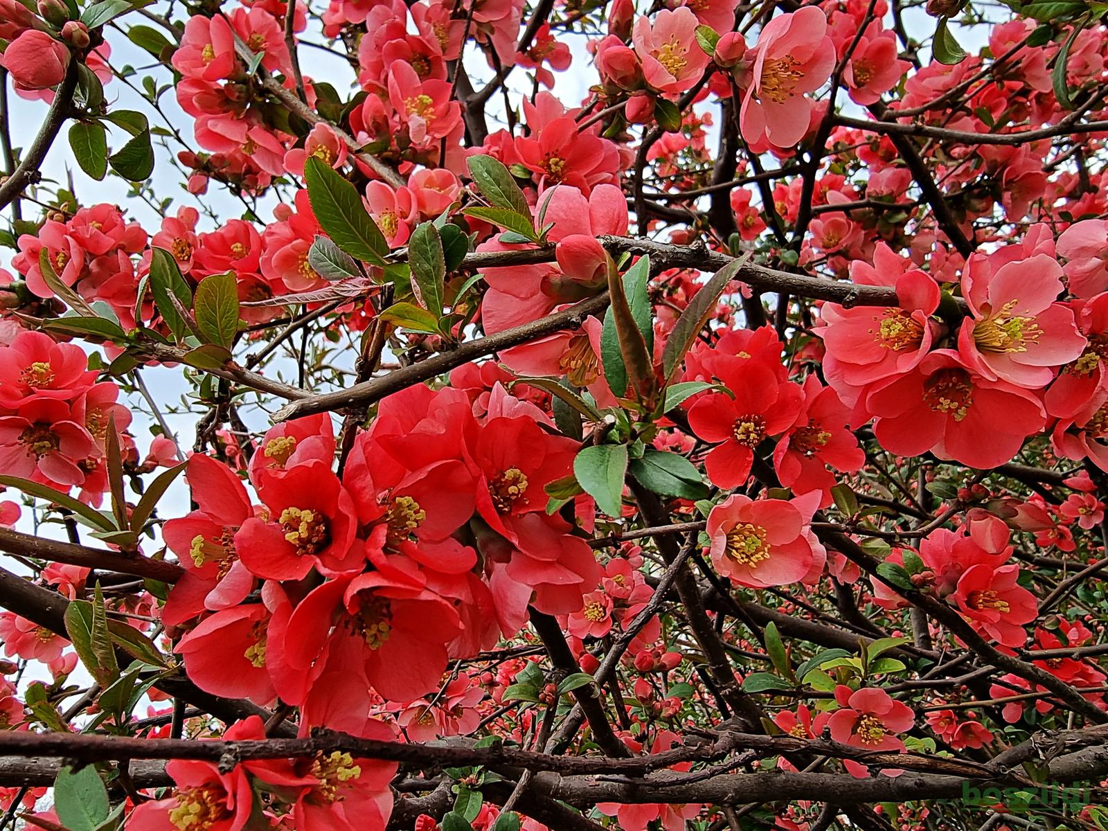 Virágszirmok 3