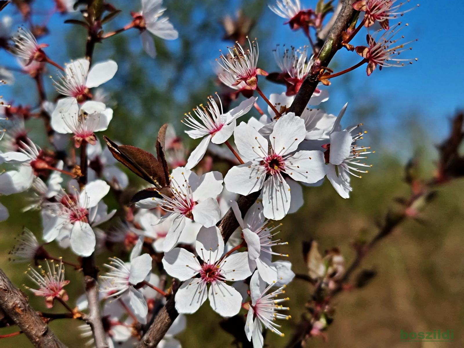 Virágszirmok 4