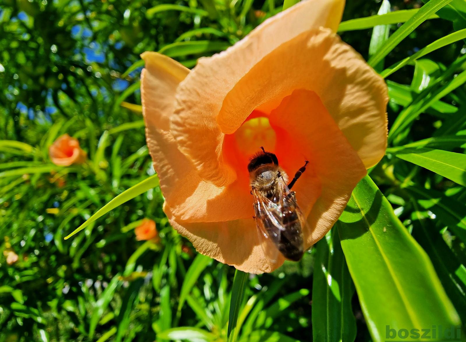 Kemeri virágpor-szívó