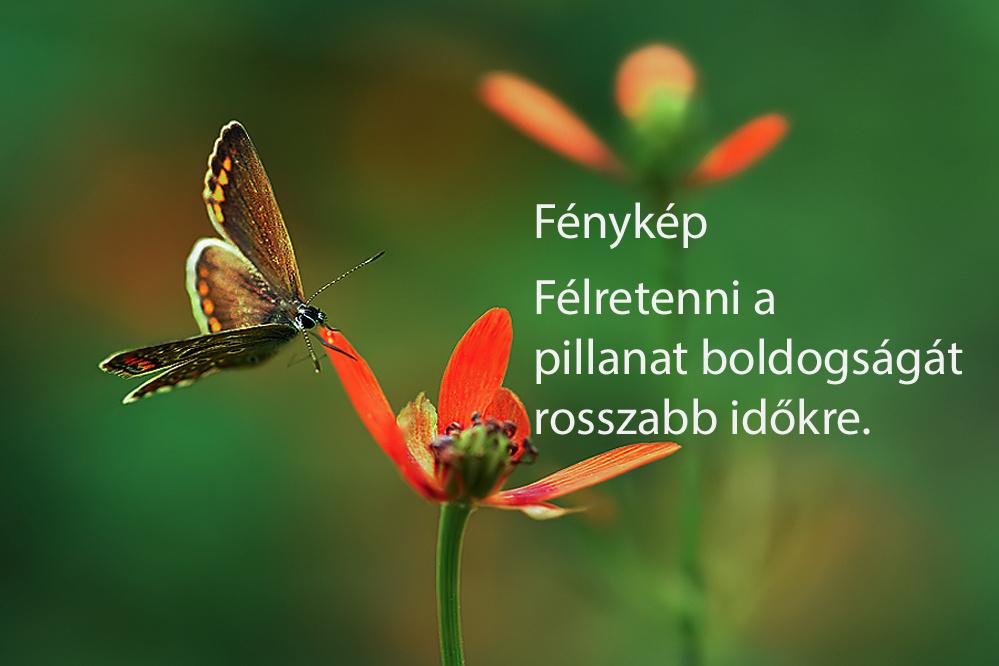 haikuk 37