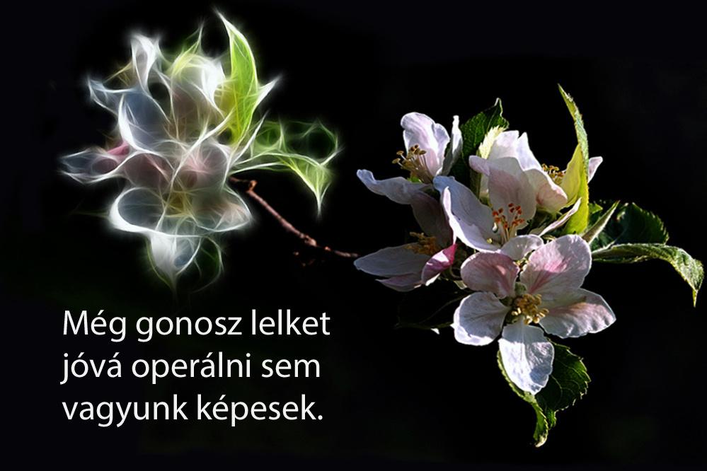 haikuk 45