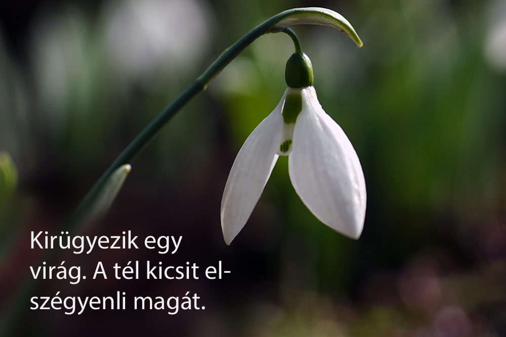 haikuk 46